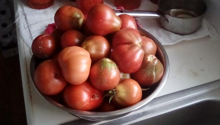 Stainless steel bowl of Japanese Black Trifele tomato fruits. Picture taken and fruits harvested on 26 August 2020.