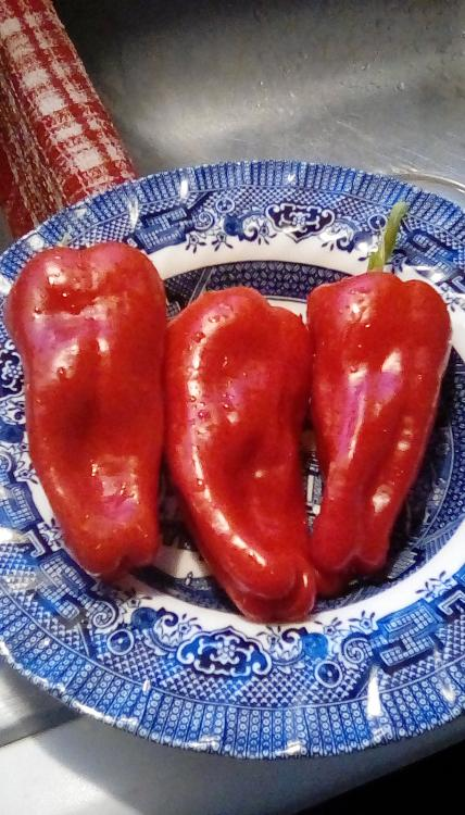 Three ripe, red, Neapolitan peppers in a bowl.