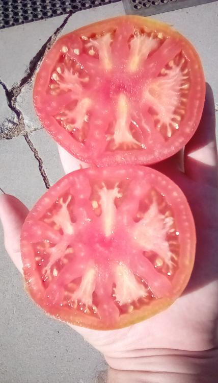 Thessaloniki tomato fruits, sliced.