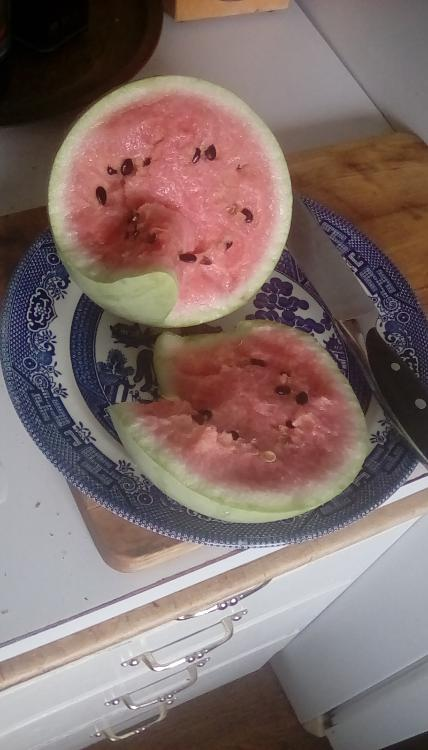 A wintermelon watermelon, cut open. It has pink flesh and dark seeds, with a light-colored striped rind. It is on a plate with a knife next to it, each on a cutting board.