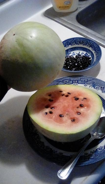 Navajo Winter watermelon fruit, cut open, with thick, but sweet rind. Red flesh. Dark seeds. Seeds in a bowl.