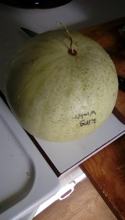 A whole, labeled King Winter watermelon fruit on a countertop. The rind is speckled.