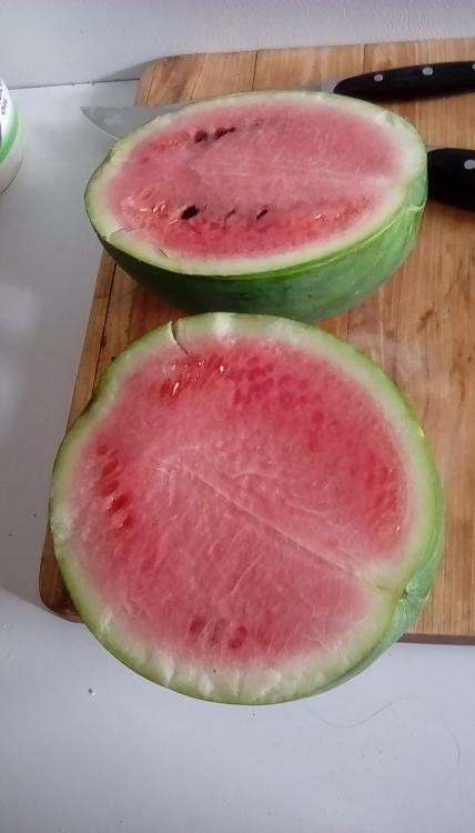 Weeks NC Giant cross watermelon fruit sliced in two. It has pink flesh and dark seeds. It is on a wooden cutting board. The fruit has stars, but only one star is only partially visible.